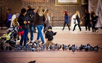 Little-boy-and-pigeons_mini