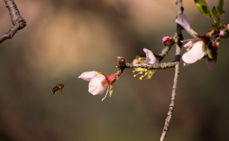 Sicily-bee-blossom-agrigento-photo-feature_mini