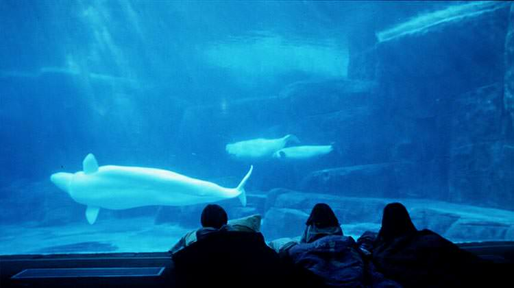 For something a little different, The Vancouver Aquarium offers sleepover packages - for a night you won't son forget (via)